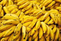 Sankcie pomohli Ekvádoru stať sa najväčším exportérom banánov do Ruska